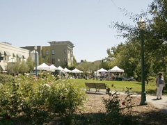 Tents for a farmers market event in a grassy area of a city park.